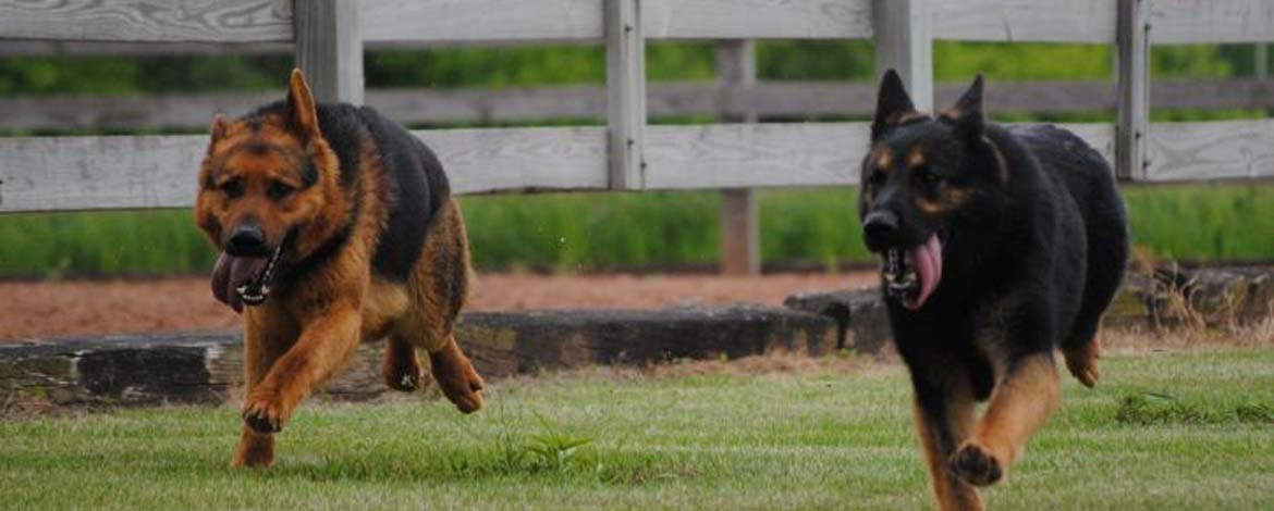 Foxwood Kennels | Home